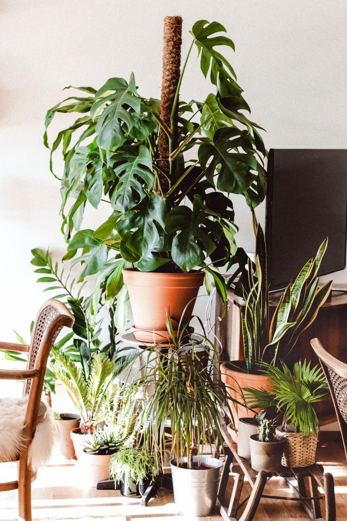 Monstera Interieur