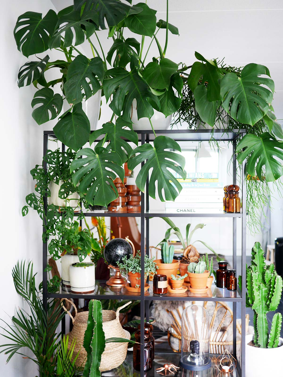 Monstera Care Guide How To Grow A Huge Monstera Fast