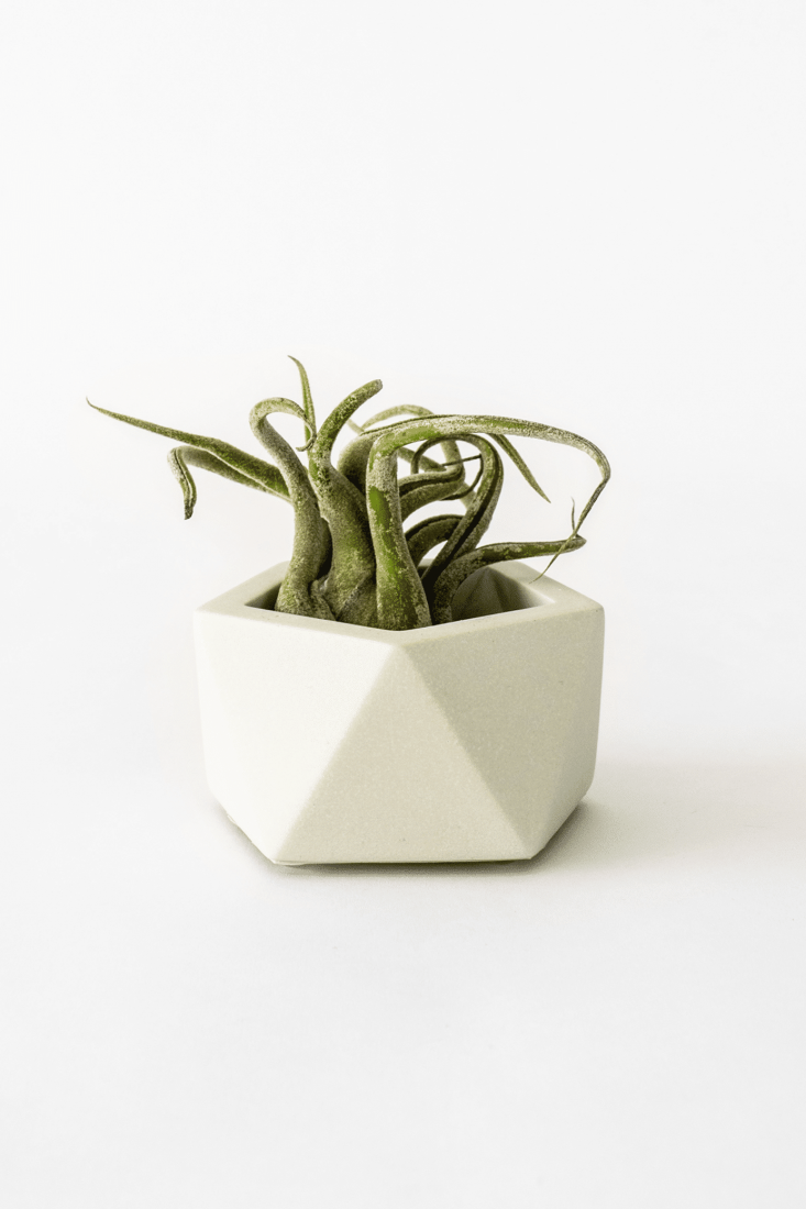 Vand small_silver green_plant
