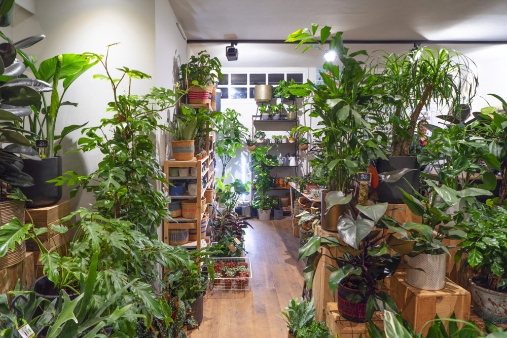 Plant Store - Little Green Stories