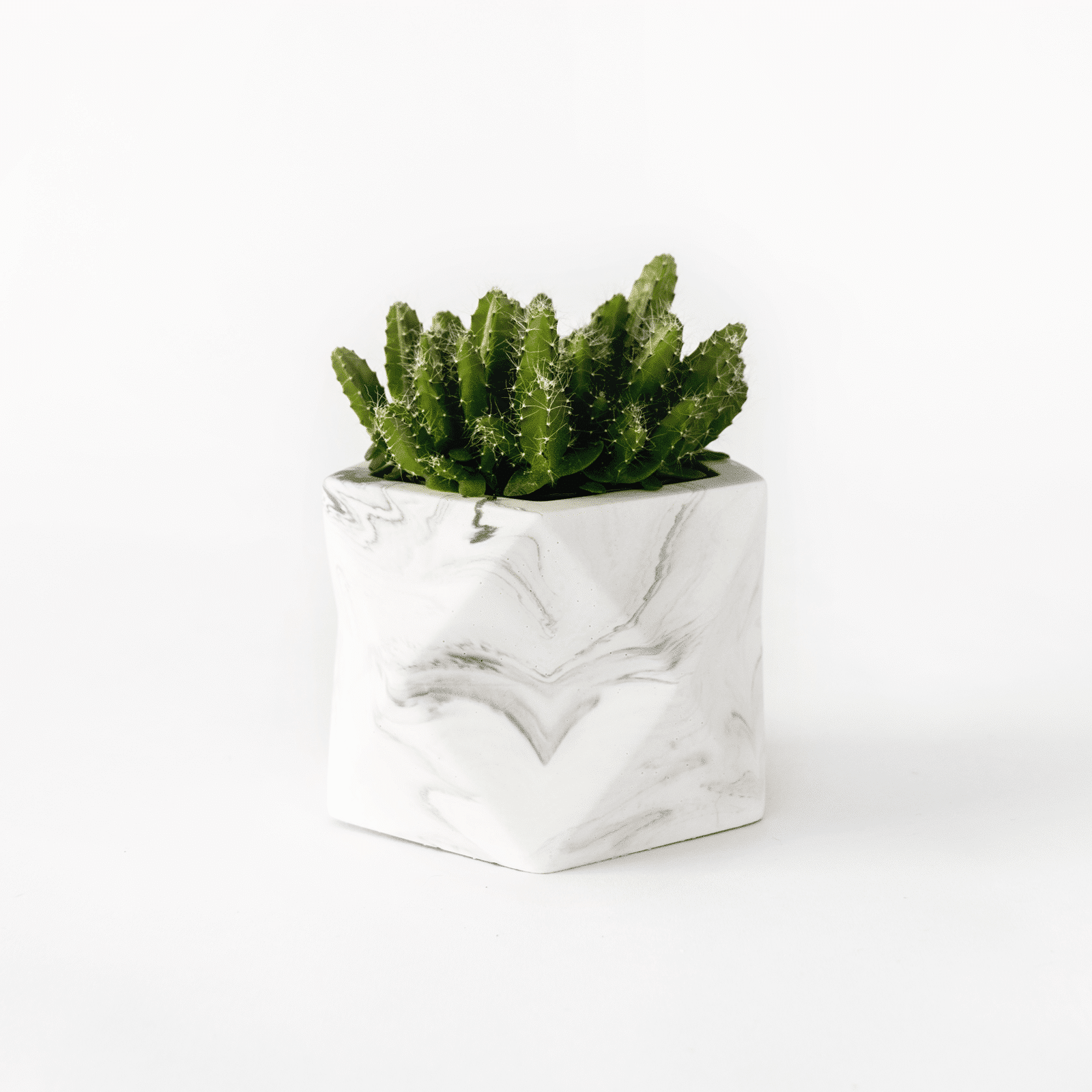 Palua medium_white marble_plant1
